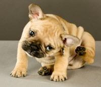 ernstige dunne honden